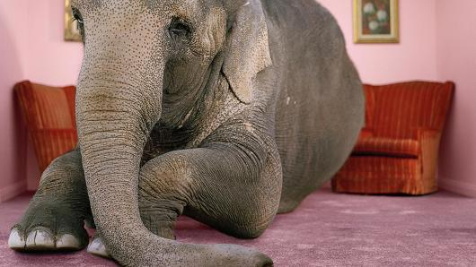 The elephant in the living room coping compass - The elephant in the living room full movie ...